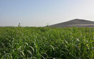 Soil technology helps reclaim desert in Xinjiang-abbizi.com